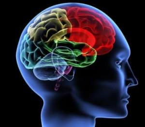 neuron-partners-neurosciences-370x323